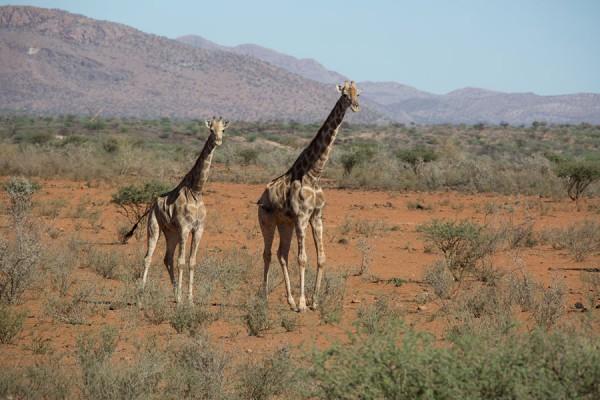 201310_namibia0749