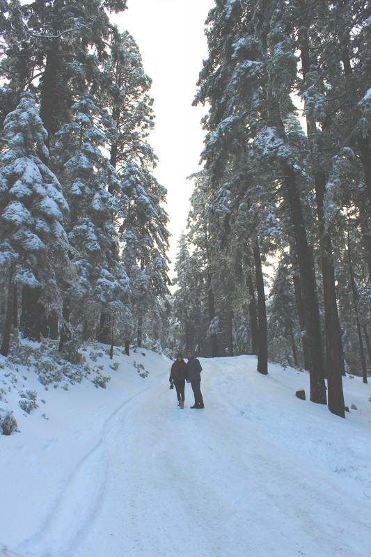 Sky forest Big Bear