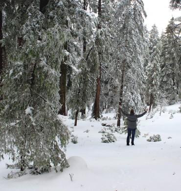 Skyforest, California