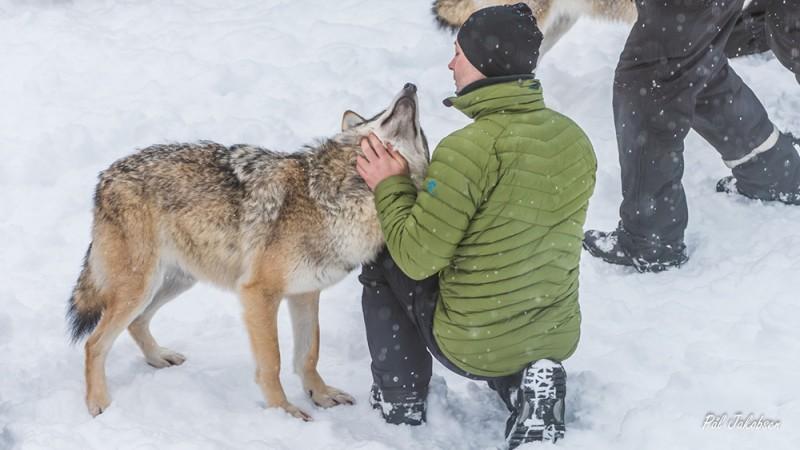 Wolf Lodge - Gearminded.com