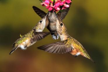 Dan Tracy Audubon