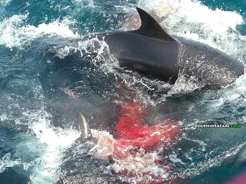 Dolphin Safari - Gearminded.com