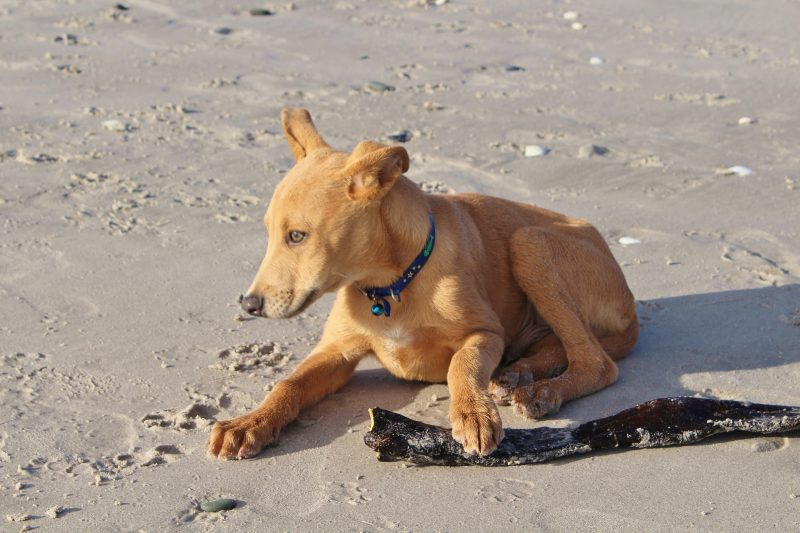 How to train your dog at the beach