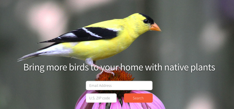 Find birds in your region