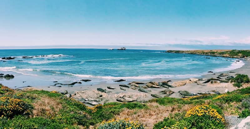 San Simeon Seal lookout