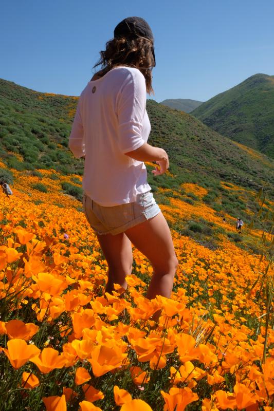 California Poppy fields Gearminded.com