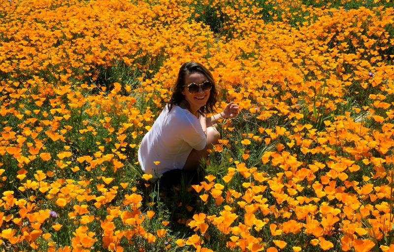 California wildflowers Gearminded.com