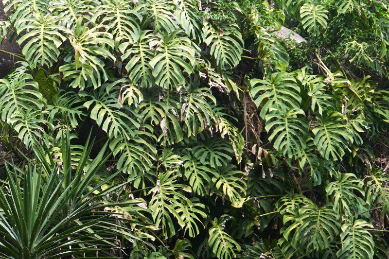 Tropical plantscape Gearminded.com