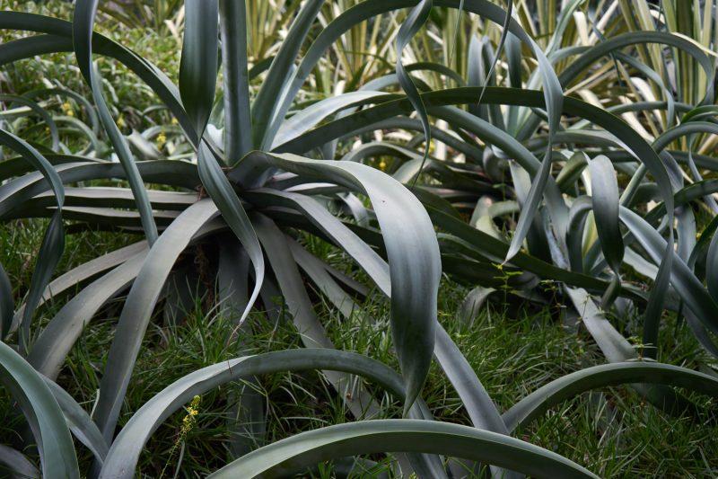 Gyde & Seek tropical plants
