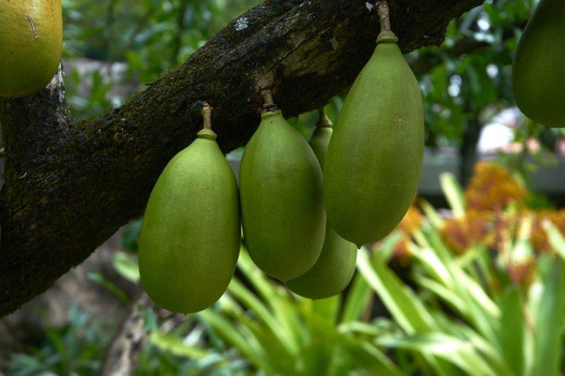 Brazilian fruit