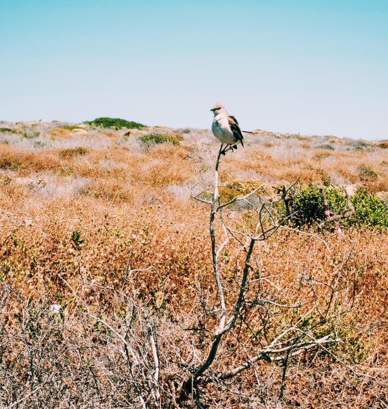 Wild bird in Dana Point Headlands