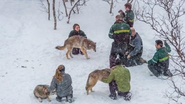 Wild Wolf Lodge - Gearminded.com