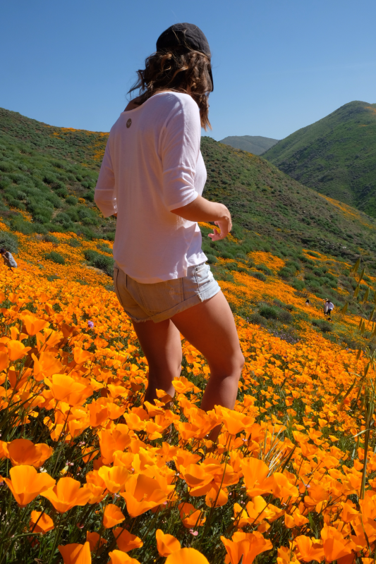 California Poppy fields Gearminded.com