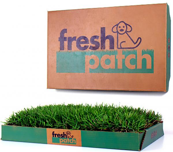 Fresh Patch Dog Grass