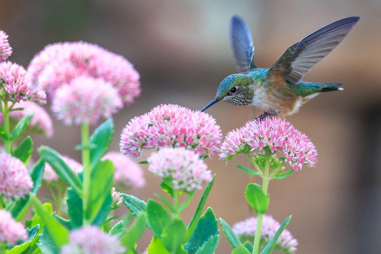 Hummingbird Gearminded.com