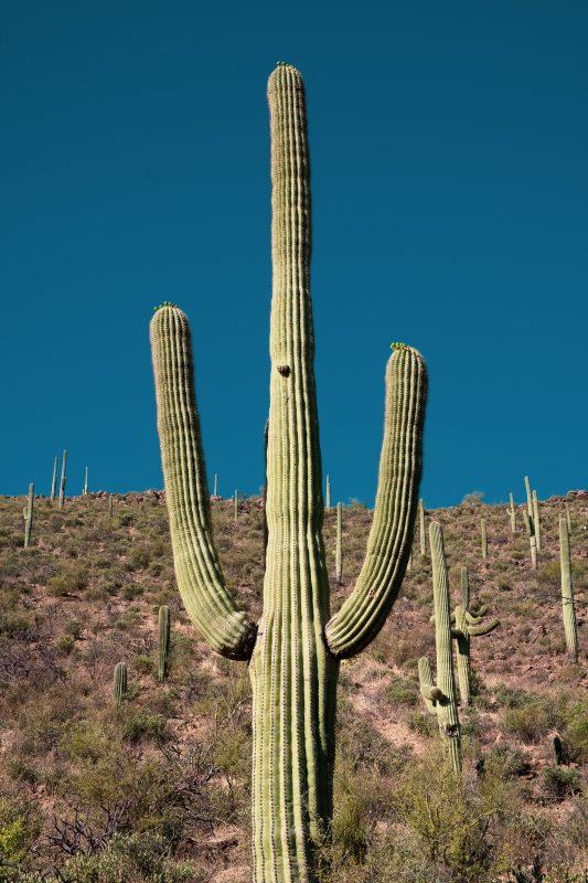 Sonoran Desert Cactus Photos -- Tucson, AZ | Gearminded.com