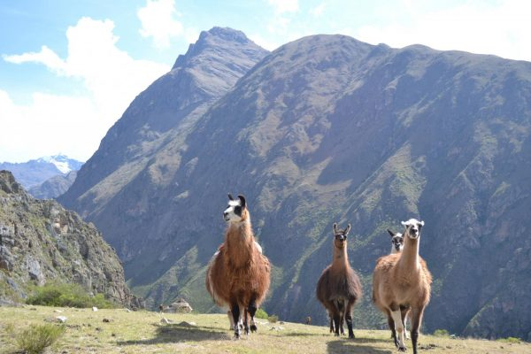 Peru cycling trip | Gearminded.com