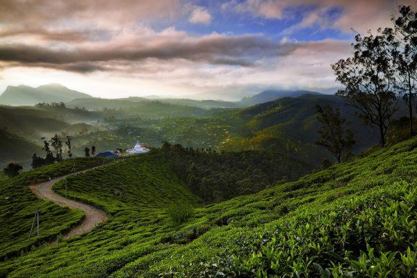 Sri Lanka Tea plantations Photo-holly_barber Grasshopper Adventures