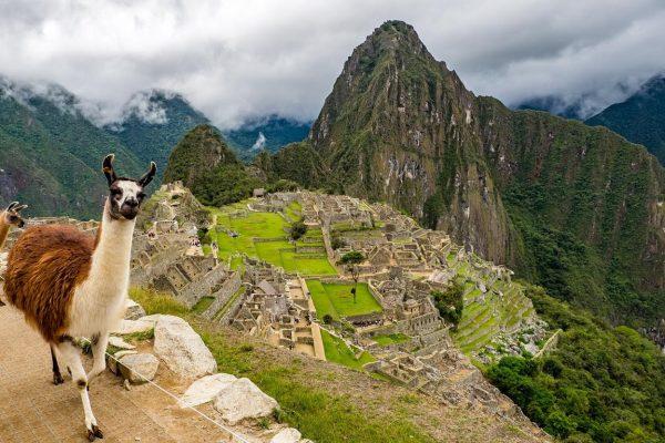 Llamas and travel
