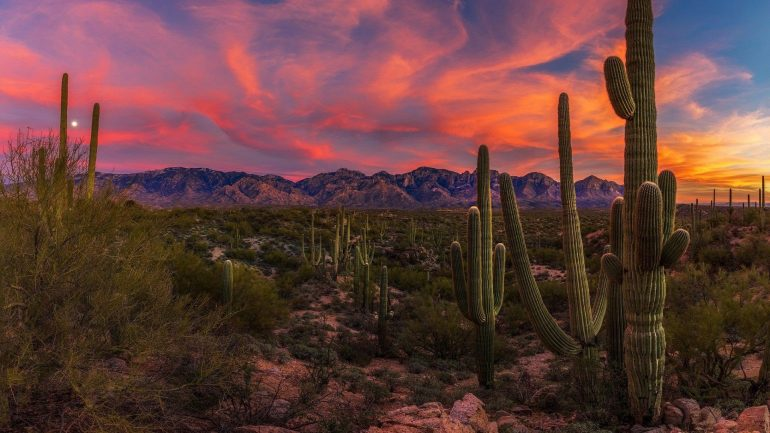See Saguaro Cactus and Escape the Cold with a 5-Day Cycling Tour of Tucson & Saguaro National Park